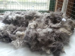 Matted cat fur